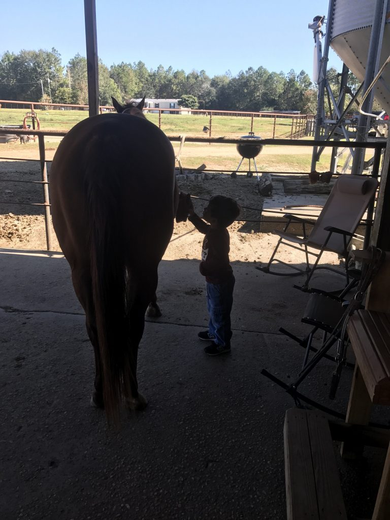 Small boy brushing large horse
